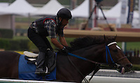 Interaction (ARG) working on the turf for trainer Ron McAnally at Santa Anita Park in Arcadia California