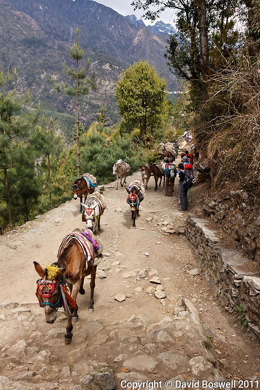 Donkeys and trekkers pass on the Everest Base Camp trail in the Dudh Kosi River Valley near Lukla, Nepal.