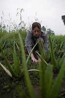 Live-in volunteers / interns / students such as Jans, from Germany, weed plants early in the morning on 7th September 2009.. Jans is studying organic farming in Bijavidyapeeth, Dehradun, Uttarakhand, India...Dr. Vandana Shiva, the founder of Navdanya Foundation and Bijavidyapeeth, is a physicist turned environmentalist who campaigns against genetically modified food and teaches farmers to rely on indigenous farming methods.. .Photo by Suzanne Lee / For The National