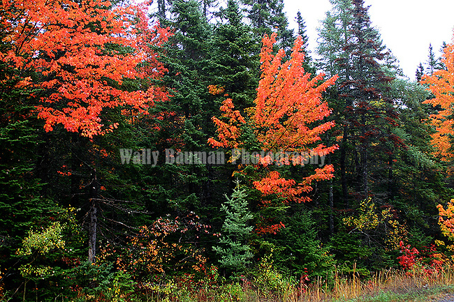 Autumn splendor.  Images of The Canadian Maritime Provinces of Nova Scotia and Prince Edward Island.