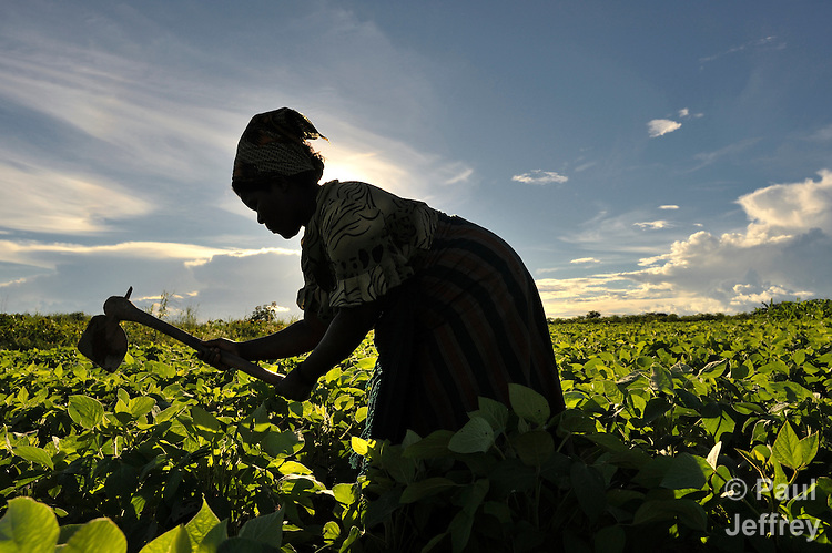 Fanny Mwale works her farm field as the sun rises near Kangawa, in northern Malawi.