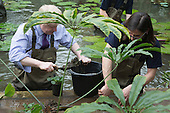 London, UK. 16 March 2015. Mayor of London Boris Johnson puts on waders and joins Kew horticulturist Carlos Magdalena, apprentices and diploma students in the pond to plant young Victoria amazonica waterlilies, colourful hybrid waterlilies, in the Princess of Wales Conservatory at the Royal Botanic Gardens, Kew.