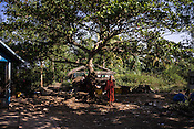 A Buddhist monk standing under a tree in Kwin Sekhan Village in Pyapon district of Myanmar.