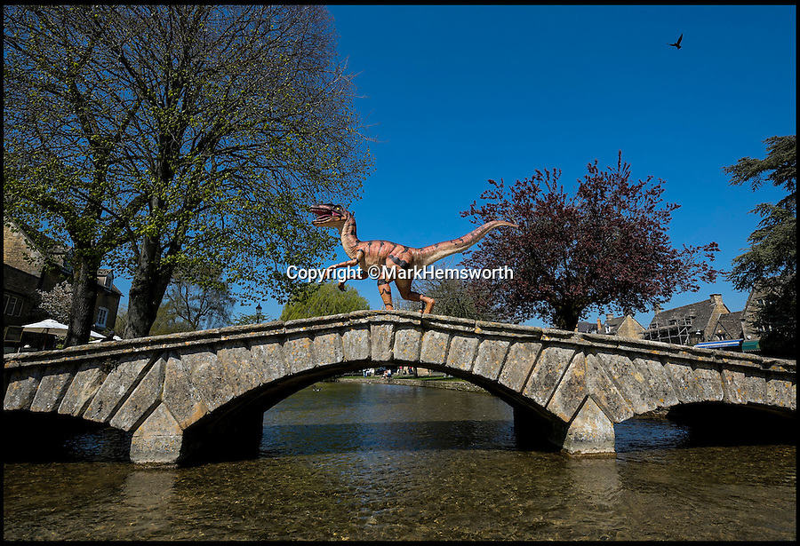 BNPS.co.uk (01202 558833)<br /> Pic: MarkHemsworth/BNPS<br /> <br /> A dinosaur making its way over Bourton-on-the-Water's bridge.<br /> <br /> Visitors to one of Britain's oldest villages are used to seeing historic sights but many couldn't believe their eyes when a herd of life-sized dinosaurs descended on the picturesque settlement.<br /> <br /> The group of model dinosaurs made a startling sight as they made their way through Bourton-on-the-Water in Gloucestershire while on their way to the nearby Birdland attraction where they will form part of a new display.<br /> <br /> Some people looked on curiously as a velociraptor crossed the village's historic stone bridge while a cearadactylus in the River Windrush also caused some bemusement.