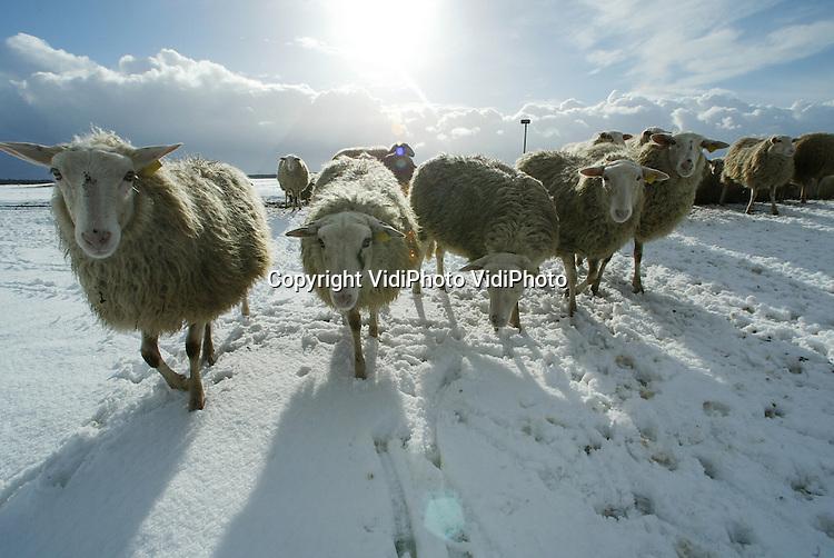 Foto: VidiPhoto..EDE - Een rustige dag voor schaapherder Henk van de Brandhof op de Edese hei donderdag. Omdat een sneeuwtapijt de hei bedekt groeperen zijn schapen bij elkaar bij de schaapskooi en weigeren ze de hei op te gaan. Van de Brandhof vermoedt dat de dieren de sneeuw te koud vinden aan hun poten. De schaapherder neemt daarom maar een extra lange pauze.