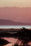 Puget Sound, Skagit Estuary, Olympic Mountains, Sunset, Washington State, Pacific Northwest, USA, Artist (photoshop) rendering.
