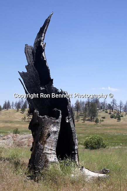 Old snarled burnt out tree stump California,  California Fine Art Photography by Ron Bennett, Fine Art Photography by Ron Bennett, Fine Art, Fine Art photography, Art Photography, Copyright RonBennettPhotography.com ©