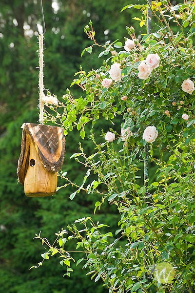 Wooden birdhouse by Woodland Creations and new dawn roses..