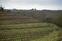 Terraced Vineyards in winter in the small wine district Quart de Chaume, Maine et Loire France