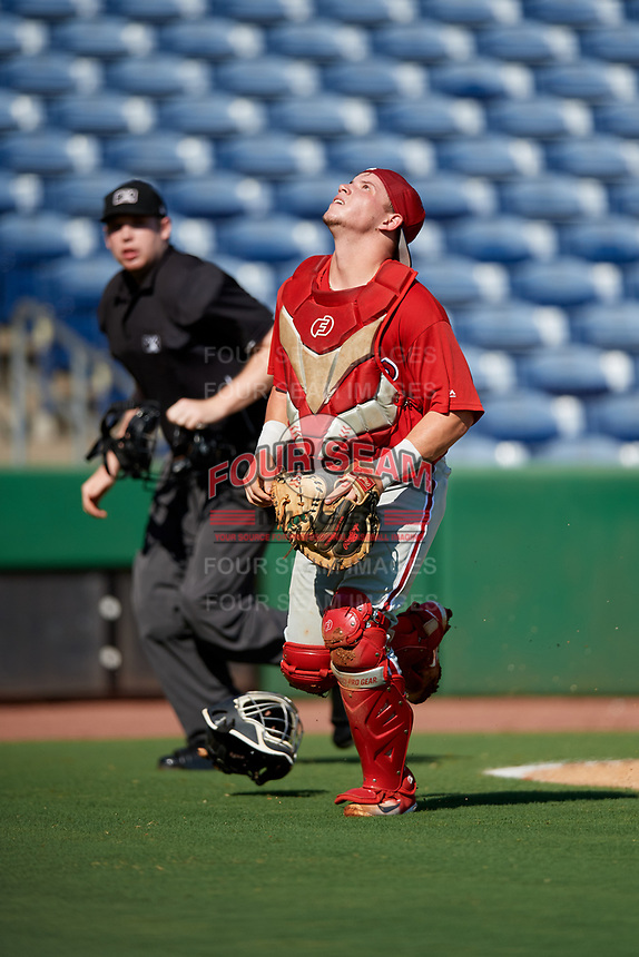 Philadelphia Phillies catcher Mitchell Edwards (19) tracks a pop up in front of home plate umpire Mitch Leikam during a Florida Instructional League game against the New York Yankees on October 12, 2018 at Spectrum Field in Clearwater, Florida.  (Mike Janes/Four Seam Images)