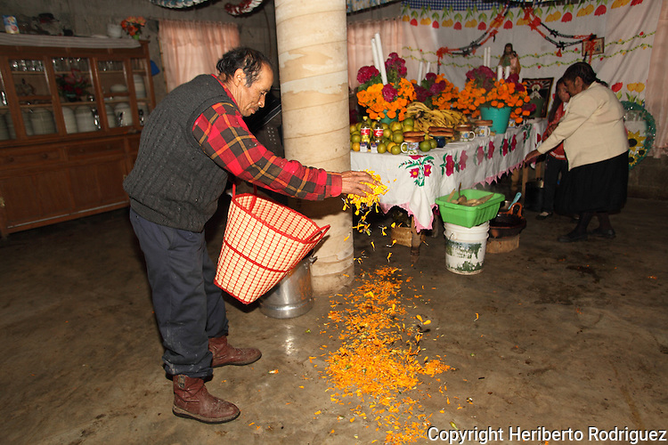 A Native nahuatl peasant puts a path of cempaxochitl flowers ( flowers of the Deads)  on the floor of his house to  mark the way back home to the deads in the village of Acaxochitlan, in northern state of Hidalgo, during the festivities of the Day of the Deads. Hundreds of Native villages pay homage to their deads on the eve of November 2 as a tradition since the preHispanic times. Photo by Heriberto Rodriguez