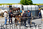 Ballyduff Horse fair on Sunday
