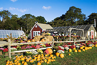 Farm and greenhouse in autumn, Barnstable, Cape Cod, MA