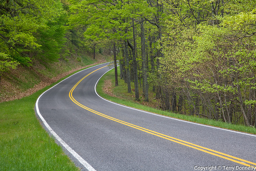 Shenandoah National Park, VA<br /> Skyline Drive curves into the spring hardwood forest
