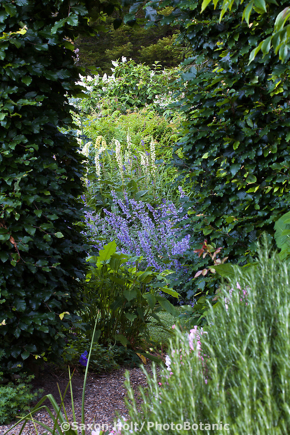 Opening in tall Beech hedge (Fagus sylvatica) as door (portal) into secret garden room with perennial border; Gary Ratway garden
