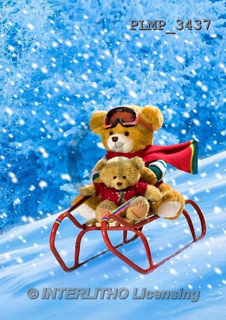 Marek, CHRISTMAS ANIMALS, WEIHNACHTEN TIERE, NAVIDAD ANIMALES, teddies, photos+++++,PLMP3437,#Xa# in snow,outsite,