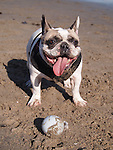 Dog playing ball in Santa Barbara