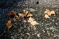 Scena autunnale, Roma, 29 novembre 2011..Autumnal scene in Rome, 29 november 2011. .UPDATE IMAGES PRESS/Riccardo De Luca
