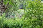 Summer in The Meadow at the Arnold Arboretum in the Jamaica Plain neighborhood, Boston, Massachusetts, USA