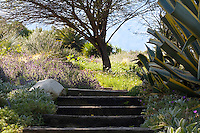 Steps leading to the botanical gardens