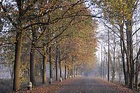 - Brescello (Reggio Emilia), viale verso il fiume Po<br /> <br /> - Brescello (Reggio Emilia), promenade to Po River