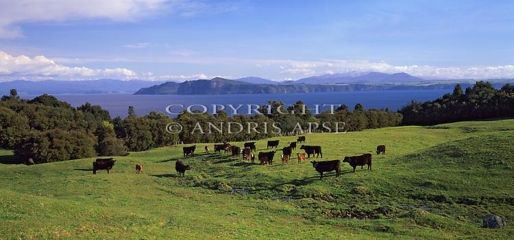 Lake Taupo. Waikato Region. New Zealand.
