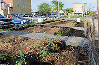 Sarnia Urban Nature Centre, Master Gardeners, One Tomato Project and a slew of volunteers, transformed a downtown vacant lot into a community vegetable garden and natural area to celebrate Earth Day.