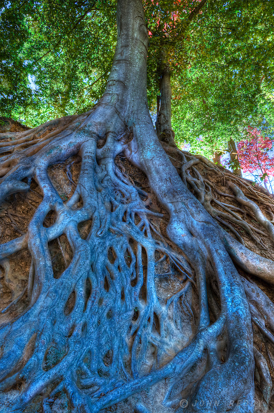 HDR image of exposed tree roots in Falls Park