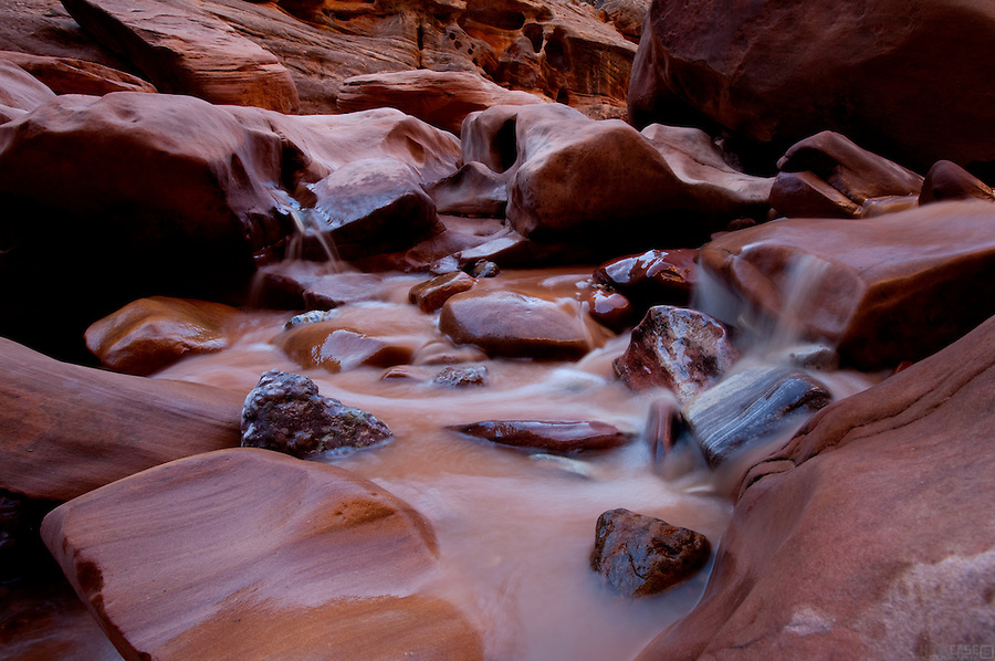 Utah's White Canyon makes a gorgeous, serpentine cut through Cedar Mesa, near Glen Canyon National Recreation Area. But it remains unprotected.<br /> <br /> It lies at the heart of the proposed Glen Canyon Wilderness, where the vast expanse of Paleozoic-era sandstone known as Nokai Dome eases its way to the upper reaches of Lake Powell in the Glen Canyon National Recreation Area.  This region also includes the soaring Wingate Cliffs of the Red Rock Plateau, Mancos Mesa, Moqui Canyon with its meandering stream, Red Canyon, and the serpentine side canyons of White Canyon. This is one of the most remote regions of the state, but it lacks protection and is threatened by increasing ORV use.<br /> <br /> It is all part of the San Juan-Canyonlands region of Southeastern Utah is one of the most iconic landscapes recommended for protection in America's Red Rock Wilderness Act, boasting dramatic geologic features wrought by elemental forces, as well as internationally significant cultural sites of the Ancestral Puebloans and the Mormon Pioneers. Adorned with buttes and arches, vast stretches of slickrock deposited over 250 million years ago, ancient pinyon-juniper forests and an artist's pallet of red-hued sandstone, the San Juan-Canyonlands region has inspired explorers since the days of John Wesley Powell, and its wonders represent some of the greatest unprotected wilderness in the country.