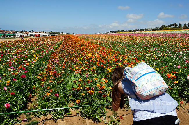 Young woman at the Ranunculus fields blooming in Calrsbad