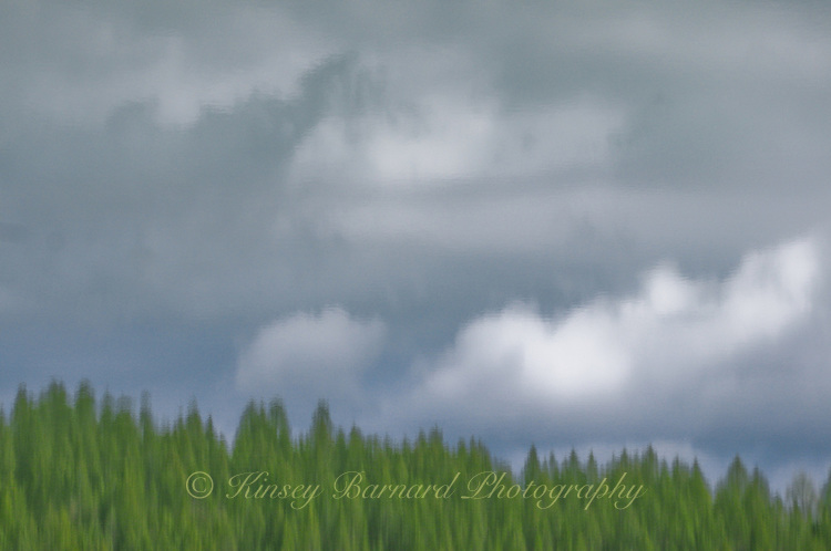 &quot;KOOTENAI STORM CLOUDS&quot;<br /> <br /> (1) 44 X 30 canvas print $2,500<br /> (1) 36 X 24 canvas print $2,000<br /> <br /> 17 x 12.5 signed paper print<br /> 1/50 $95.00<br /> <br /> <br /> <br /> <br /> <br /> <br /> Gray clouds over a green forest. It's all an illusion.