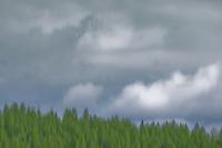 """KOOTENAI STORM CLOUDS""<br /> <br /> (1) 44 X 30 canvas print $2,500<br /> (1) 36 X 24 canvas print $2,000<br /> <br /> 17 x 12.5 signed paper print<br /> 1/50 $95.00<br /> <br /> <br /> <br /> <br /> <br /> <br /> Gray clouds over a green forest. It's all an illusion."