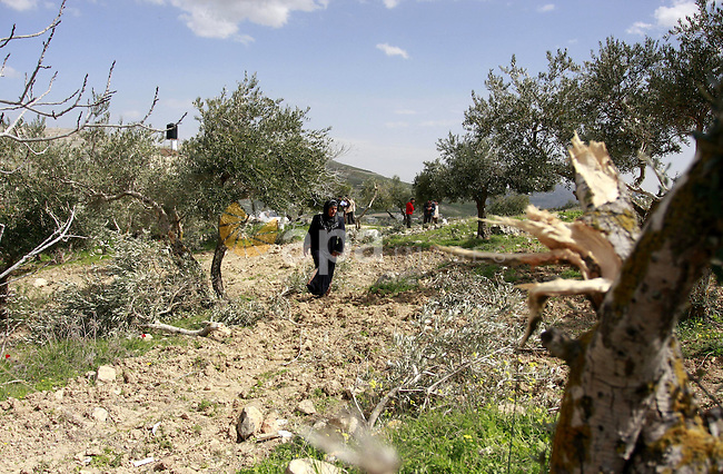 Palestinian woman reacts next to cut olive trees in the northern West Bank village of Burin, near Nablus, Tuesday, Feb. 28, 2012. According to Palestinian farmers some 23 olive trees were damaged by Jewish settlers from the nearby settlement of Yitzhar. Photo by Wagdi Eshtayah