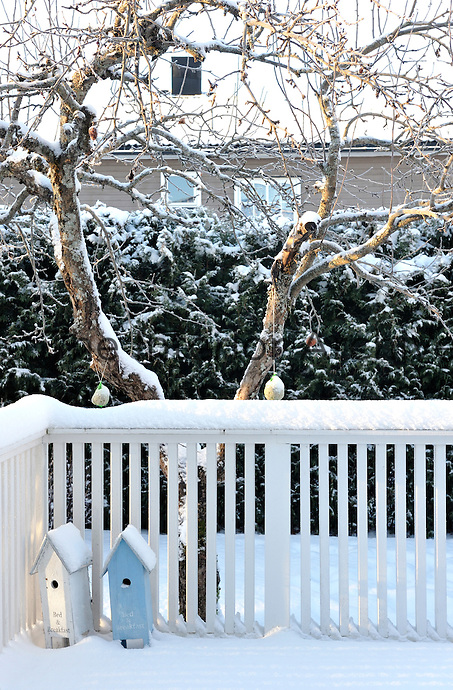 Nesting boxes left out over winter lean drunkenly against the snow-covered balustrade of the veranda