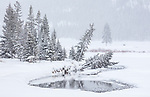 Yellowstone National Park, Wyoming: Round Prairie with an opening in the waters of Soda Butte Creek in winter