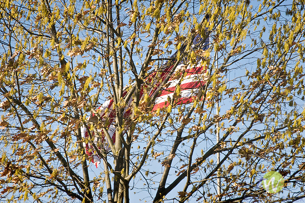 American flag, with tree limbs
