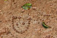 Museo all'aperto della Dolina del XV Bersaglieri, presso il monte Sei Busi. Questo Museo e' formato da tre doline (depressioni del terreno carsico). Cio' che rimane di un piccolo ospedale da campo costruito all'interno di una dolina. In terra l'impronta di uno stivale ferrato<br /> The 'Dolina of the XV Beraglieri', next Mount Sei Busi. The ruins of a little hospital built into one of the carsic holes.<br /> Redipuglia 03-09-2014 Lungo tutto il confine del Friuli Venezia Giulia, e nella fattispecie nella zona del Carso isontino, si snoda quello che durante la Prima Guerra Mondiale, o Grande Guerra, era chiamato il fronte orientale, conteso tra l'esercito italiano e quello austro-ungarico. La zona del fiume Isonzo, obiettivo strategico, fu teatro di ben 11 battaglie e di una estenuante guerra di posizione, costata la vita migliaia di soldati. Numerose sono ancora le testimonianze di quei terribili giorni sulle colline isontine, per cui, con i patrocinio della comunit&agrave;' europea, sono stati costituiti dei veri 'musei all' aperto' con percorsi che permettono di visitare i luoghi pi&ugrave;' importanti di quelle battaglie.<br /> Along the northern borders of Friuli Venezia Giulia, Italy, was part of the called Eastern Front during the 'World War I' also said the 'Great War'. The Isonzo river, a strategic target, was theatre of 11 battles between italian and Austro-Hungarian troops, where hundred thousand soldiers lost their lives. <br /> To remember that war, a series of 'open air museums' where established, along the most important places where the battles took place and where is still possible to see trenched systems, hospitals, mass graves, barbed wire ecc.<br /> Photo Samantha Zucchi Insidefoto