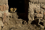 Domestic Cat (Felis catus) kitten in doorway, Ciudad de Piedra, Andes, western Bolivia