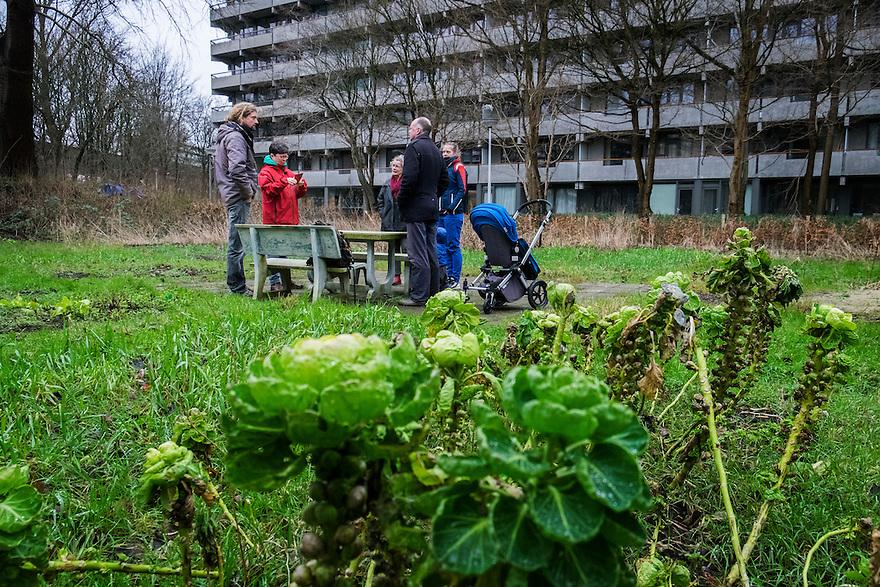 Nederland, Amsterdam, 20 feb 2016<br /> Kleituin. Gezamelijke moestuin bij klusflat Kleiburg. Bewoners van klusflat Kleiburg kunnen hier tuinieren en groente kweken. <br /> <br /> Foto (c) Michiel Wijnbergh