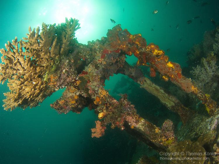 Apo Reef, Sulu Sea -- Coral growth on Apo Wreck, an unidentified shipwreck on Apo Reef.