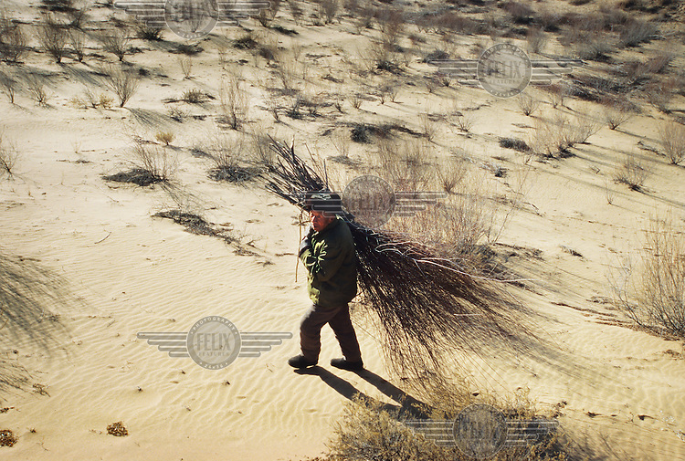 A man carries firewood which he has collected in the sand dunes on the Loess Plateau, which is located in one of China's driest regions....