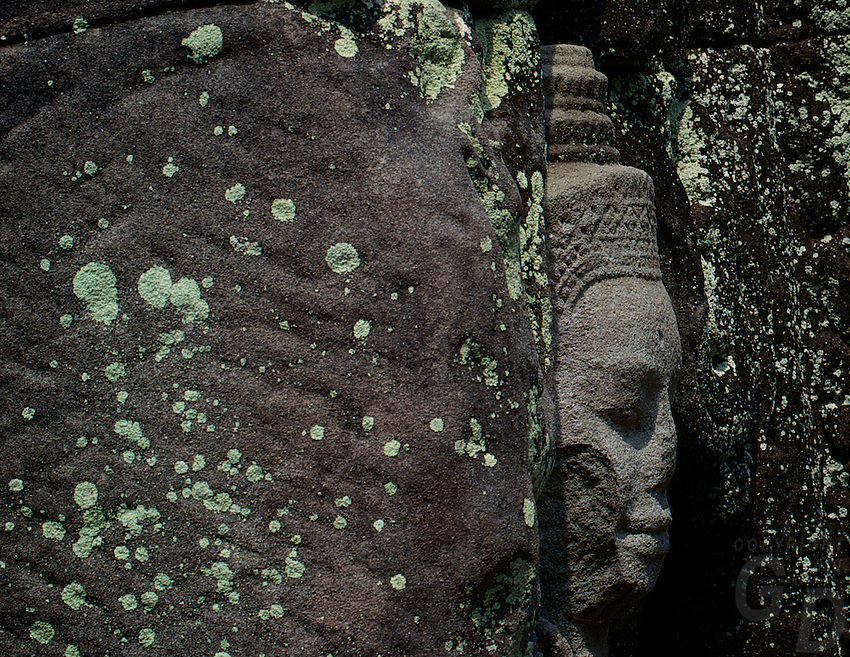 """The green algae in Phreah Khan is a microbial biofilms have been found degrading sandstone at Angkor Wat, Preah Khan, and the Bayon and West Prasat in Angkor. The dehydration and radiation resistant filamentous cyanobacteria can produce organic acids that degrade the stone. A dark filamentous fungus was found in internal and external Preah Khan samples, while the alga Trentepohlia was found only in samples taken from external, pink-stained stone at Preah Khan.<br /> <br /> Preah Khan was built on the site of Jayavarman VII's victory over the invading Chams in 1191. Unusually the modern name, meaning """"holy sword"""", is derived from the meaning of the original—Nagara Jayasri (holy city of victory). The site may previously have been occupied by the royal palaces of Yasovarman II and Tribhuvanadityavarman.<br /> <br /> The temple's foundation stela has provided considerable information about the history and administration of the site: the main image, of the bodhisattva Avalokiteśvara in the form of the king's father, was dedicated in 1191 (the king's mother had earlier been commemorated in the same way at Ta Prohm). 430 other deities also had shrines on the site, each of which received an allotment of food, clothing, perfume and even mosquito nets; <br /> the temple's wealth included gold, silver, gems, 112,300 pearls and a cow with gilded horns.<br /> The institution combined the roles of city, temple and Buddhist university: there were 97,840 attendants and servants, including 1000 dancers and 1000 teachers.<br /> <br /> The temple is still largely unrestored: the initial clearing was from 1927 to 1932, and partial anastylosis was carried out in 1939. Since then free-standing statues have been removed for safe-keeping, and there has been further consolidation and restoration work. Throughout, the conservators have attempted to balance restoration and maintenance of the wild condition in which the temple was discovered."""