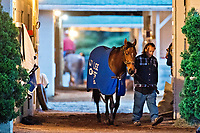 LOUISVILLE, KENTUCKY - MAY 01: Lookin At Lee, owned by L and N Racing, LLC and trained by Steve Asmussen, is walked in the barn during Kentucky Derby and Oaks preparations at Churchill Downs on May 1, 2017 in Louisville, Kentucky. (Photo by Scott Serio/Eclipse Sportswire/Getty Images)