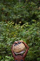 "Black woman carries basket full of acai fruits in the forests of Sao Raimundo Quilombo at Alcantara, Maranhao State, Northeastern Brazil. In a study of three traditional Caboclo populations in the Brazilian Amazon, acai palm was described as the most important plant species because the fruit makes up a major component of their diet, up to 42% of the total food intake by weight. In 2005, an article published by Greenpeace International stated that ?the tasty dark violet wine of acai is the most important non-wood forest product in terms of money from the river delta of the Amazon.? A 2008 Los Angeles Times article noted that while acai has been acclaimed by some sources as a renewable resource that can provide a sustainable livelihood for subsistence harvesters without damaging the Amazon Rainforest, conservationists worry that acai could succumb to the destructive agribusiness model of clear-cut lands, sprawling plantations, and liberal application of pesticides and fertilizer. In May 2009, Bloomberg reported that the expanding popularity of acai in the United States was ""depriving Brazilian jungle dwellers of a protein-rich nutrient they've relied on for generations."
