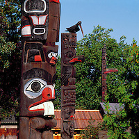 Totem Poles in Thunderbird Park, Victoria, BC, British Columbia, Canada.  Haida Totem Pole (left), Gitxsan (Gitksan) Totem Pole (centre), and Haida Totem Pole (right).