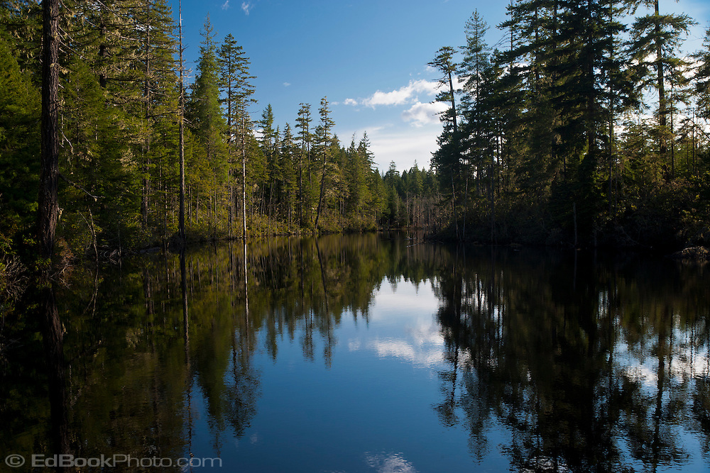 Calm Water Reflects The Sky In A Forest Fringed Kitsap