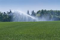 Irrigating spring barley wih a rain gun - April, Norfolk