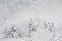 A winter snow storm move along the slopes of Flint Mountain, Cherokee National Forest