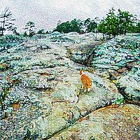 A digital painting of a welsh corgi climbing up the turtle rocks of Petit Jean State Park.