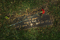 A veterans bronze grave marker with red carnation placed on it on Memorial Day.